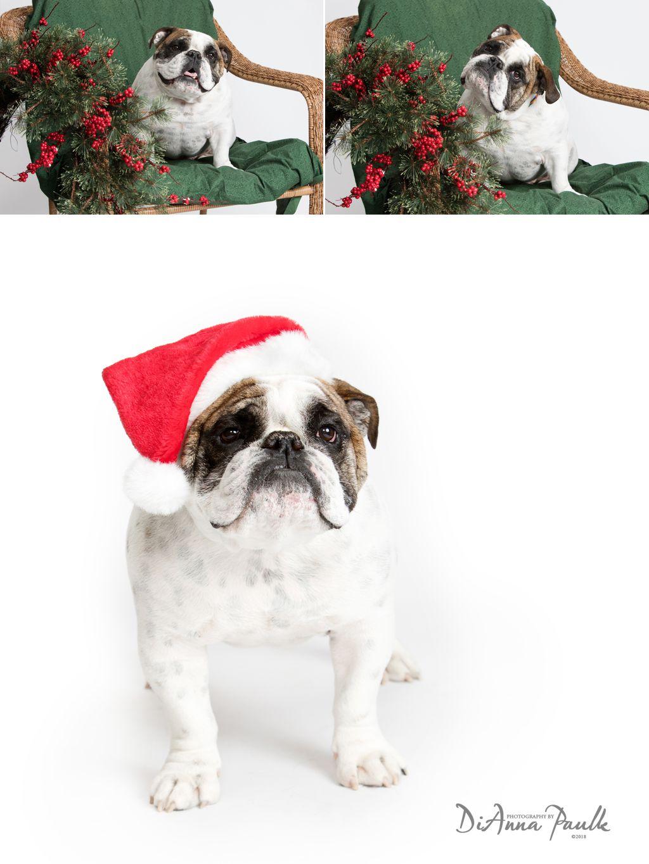 Christmas Pets 1