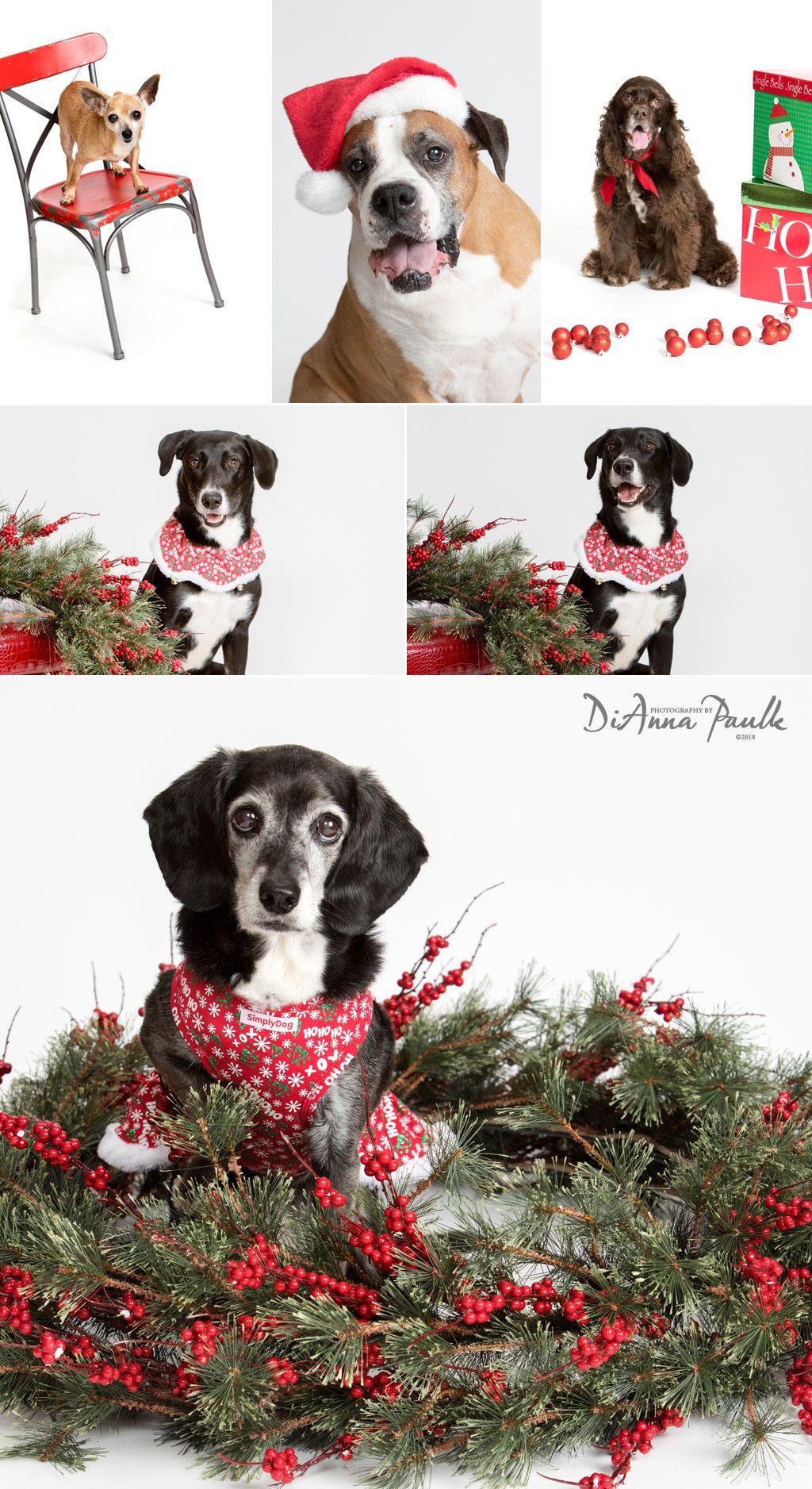 Christmas Pets 2