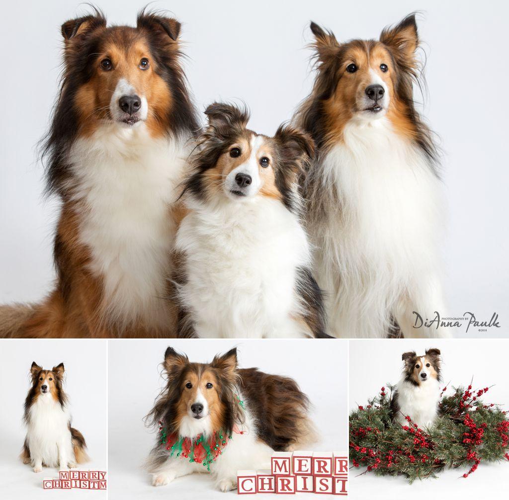 Christmas Pets 5