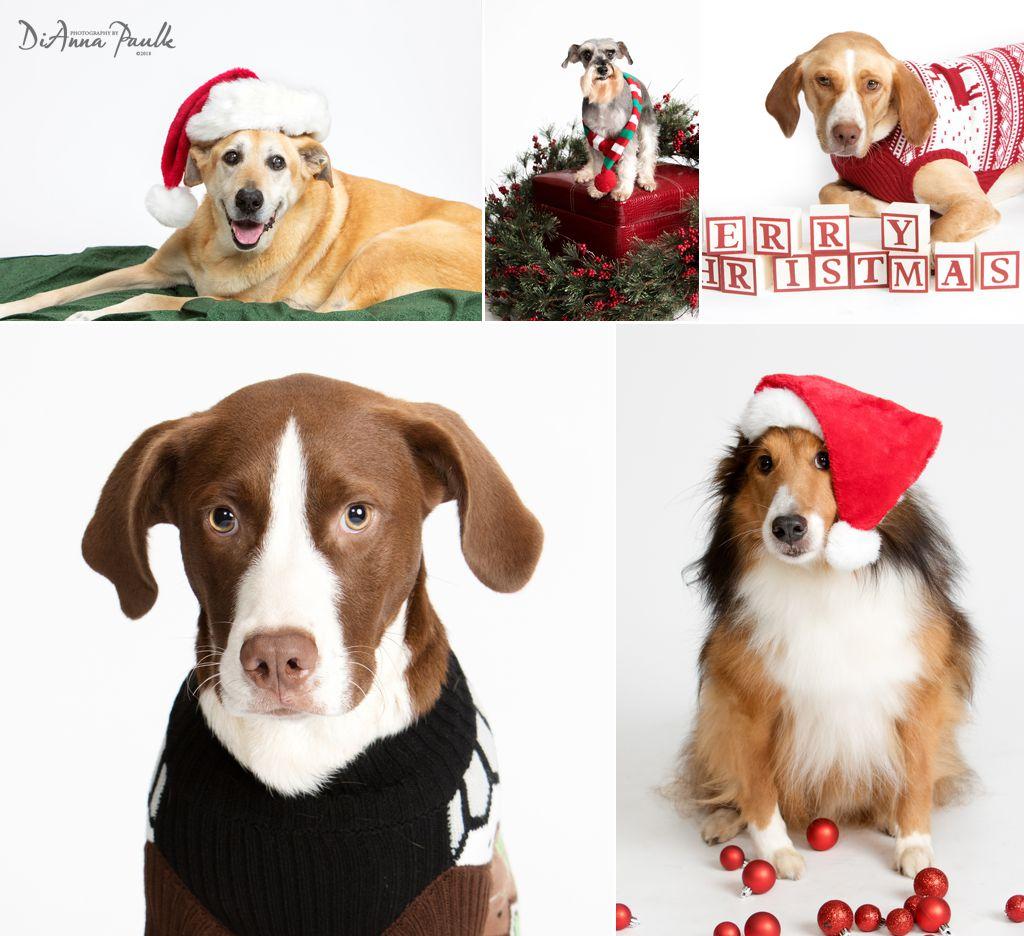 Christmas Pets 6
