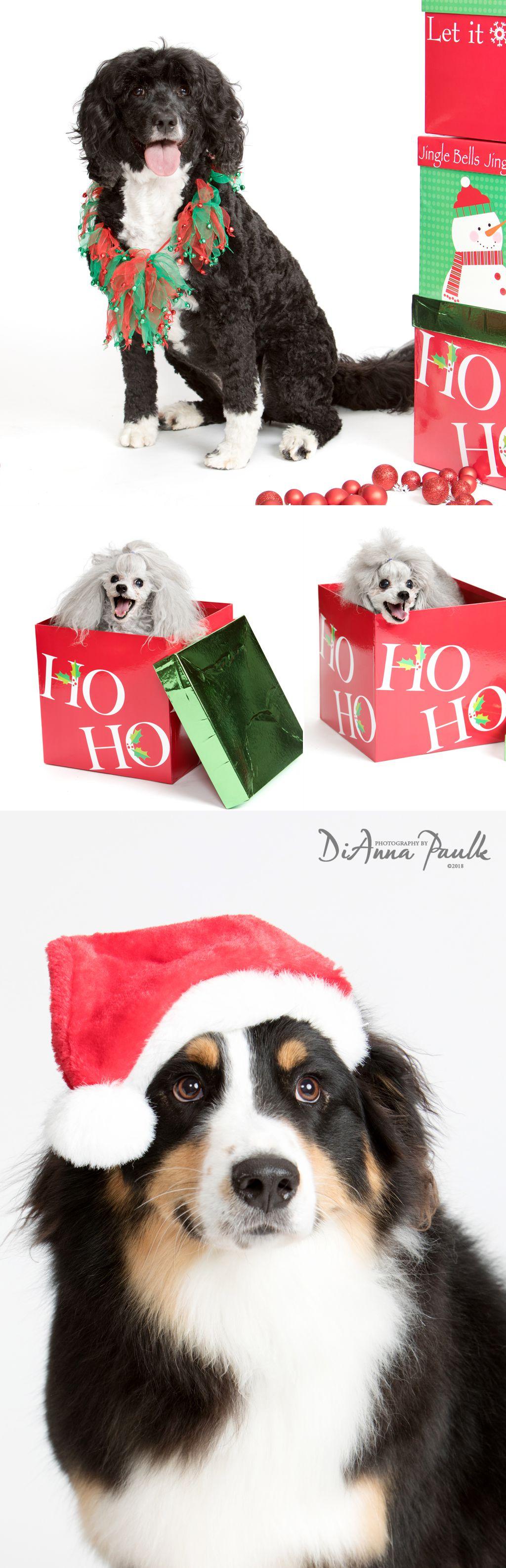 Christmas Pets 7