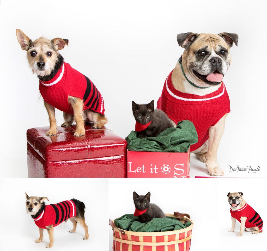 Christmas Pets 8